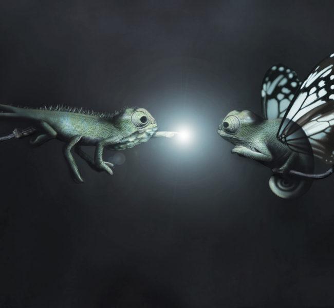 Gabellare | Graphic design portfolio & shop of Genesis Alvarez | Photo manipulation, mutant chameleons first supernatural encounter.